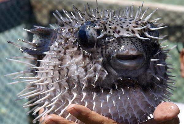 Faux goût ce vrai poisson ?