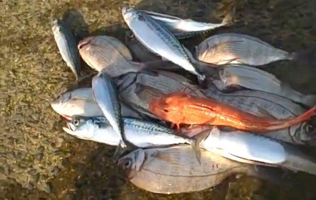 Retour de pêche de Pêche Tonton