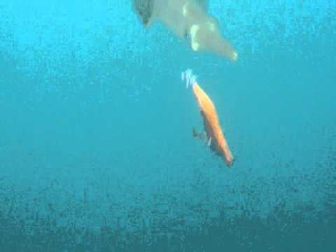 Squid love Yamashita