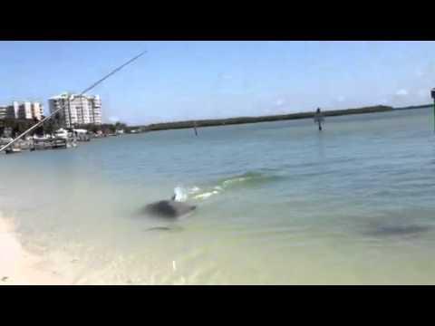 Flipper le pêcheur