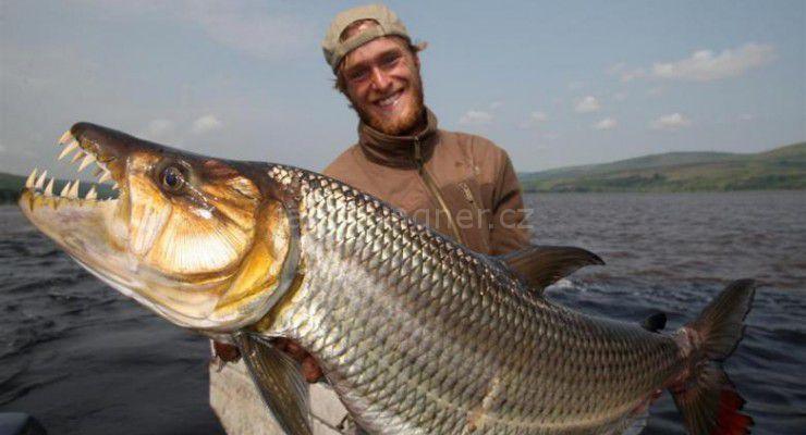 Goliath Tiger Fish: le Tigre du fleuve
