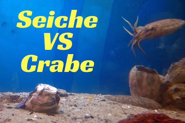 Seiche VS Crabe