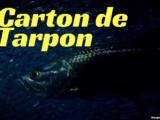 Carton de Tarpon !
