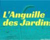 anguille des jardins
