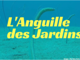 L'Anguille des Jardins
