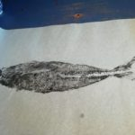 gyotaku de chinchard
