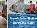 Dorade grise «ikejime» par Pêche Tonton