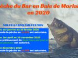 La pêche du Bar en Baie de Morlaix en 2020 !