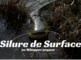 Silure de Surface