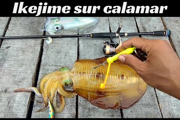 Ika shime ou l'Ikejime sur calamar