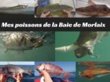 Mes poissons de la Baie de Morlaix