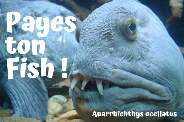 Payes ton Fish !