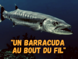 Un Barracuda au bout du fil